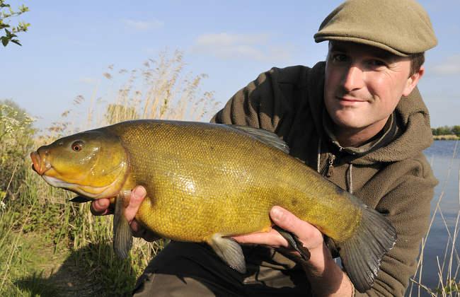 Die Schleie ist der Frühlingsfisch schlechthin. Sobald sich das Wasser erwärmt ist sie aktiv.