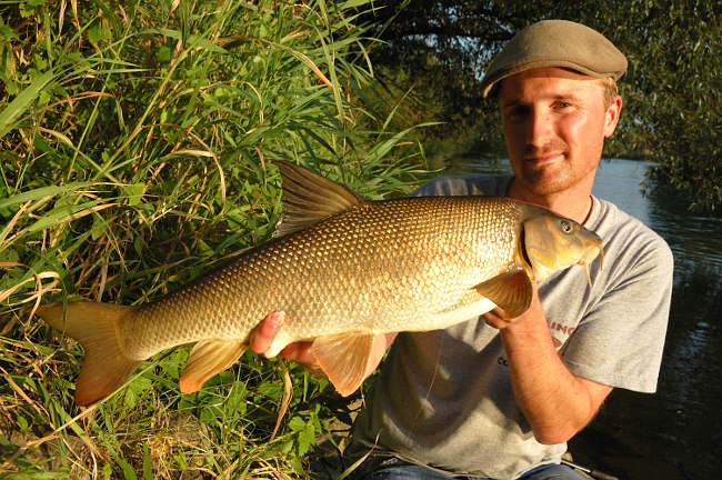 Ab Mitte Juni beginnt der heiße Barbensommer. Jetzt stehen die Fische dicht zusammen und fressen eifrig.